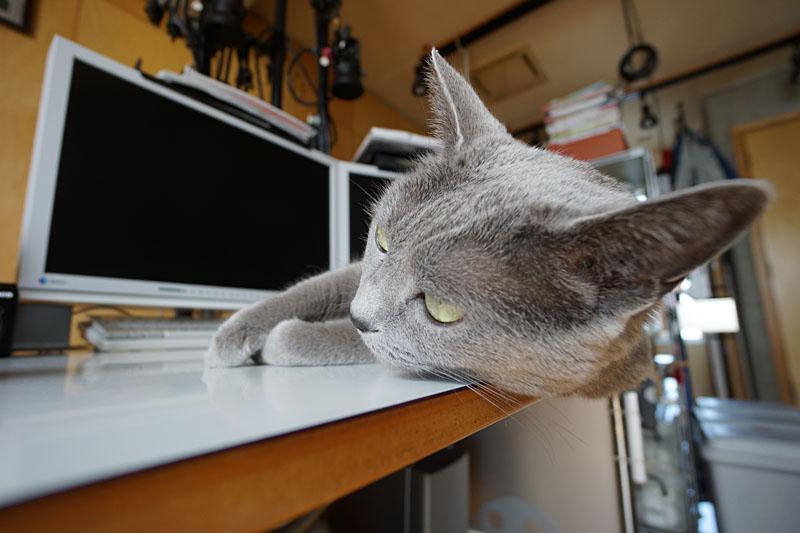 (2)ニャ。なるべく端で寝るようにしてるニャ。