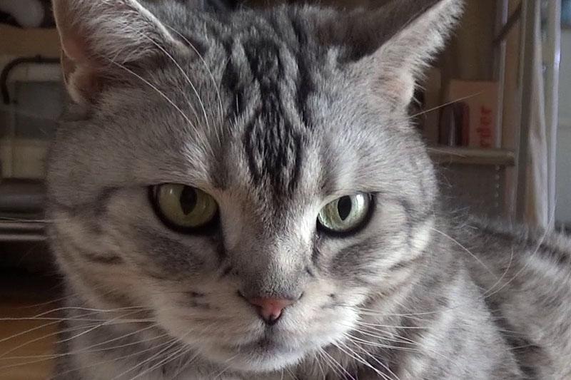 カメラを低い位置でホールドして猫を撮影。カメラを保持しにくい姿勢ゆえ手ブレしがちだが、これも安定した動画が撮れた。左のドットバイドット画像のとおり、暗めの状況下でもさほどノイズ感はなく、精細さも十分ある