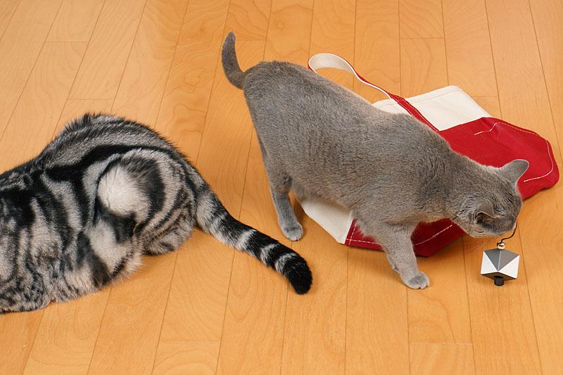 アニュカニってニャにかしら? ツルツルらしい。うかちゃんは猫だからわかりません。ぼぼぼ、ぼくもわかりません。ニャニャ。ニャニャ。的な。