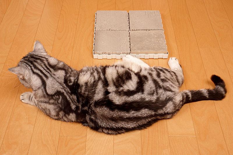 (3)ぼぼ、ぼくは飽きた。猫缶とシーバをおくんニャさい。