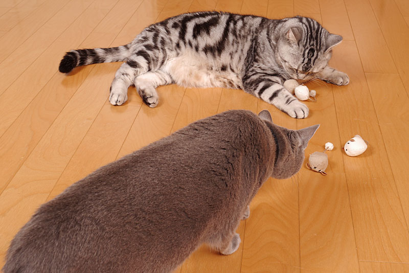 うかちゃんは猫なのでLEDライトがなくても見えるの。ぼぼぼ、ぼくも猫なのでLEDライト無しで見えるし猫缶食べたい。ニャニャ。ニャ。みたいな。