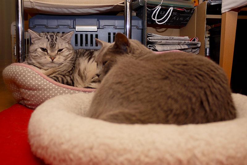 ニャッカマンってニャにかしら? 火らしい。火は嫌いなの。ぼぼぼ、ぼくは少し好きだけど猫缶のほうが好きです。ニャニャニャ。ニャ。的な。