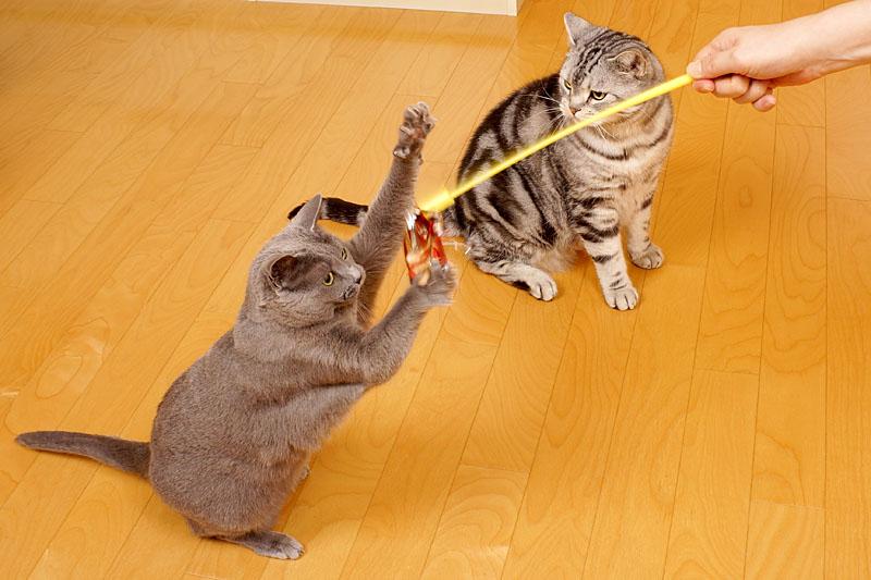 うかちゃんは猫だから時間など全然気にしません。ぼぼぼ、ぼくも気にしないけど猫缶とササミとシーバを気にします。ニャ。ニャ。みたいな。