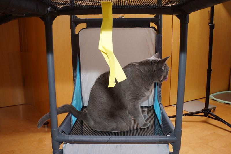 (1)ニャ。うかちゃんは網の上で休憩中ニャんです。