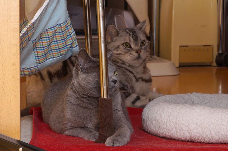 うかちゃんは色付きのラインをゲヒゲヒして遊ぶのが好きなのよ。ぼぼぼ、ぼくは透明ラインも少し見える。ニャニャニャニャ。ニャ。みたいな。