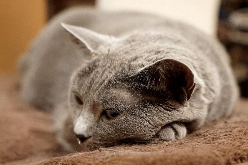 (2)眠いニャ。ゴロゴロゴロ。眠いんです。