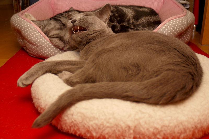 うかちゃんは猫なので背中になんか貼ると匍匐前進になっちゃうの。ぼぼぼ、ぼくも猫だし背中に何か貼らないでくださいあと猫缶ください。ニャ。ニャ。的な。