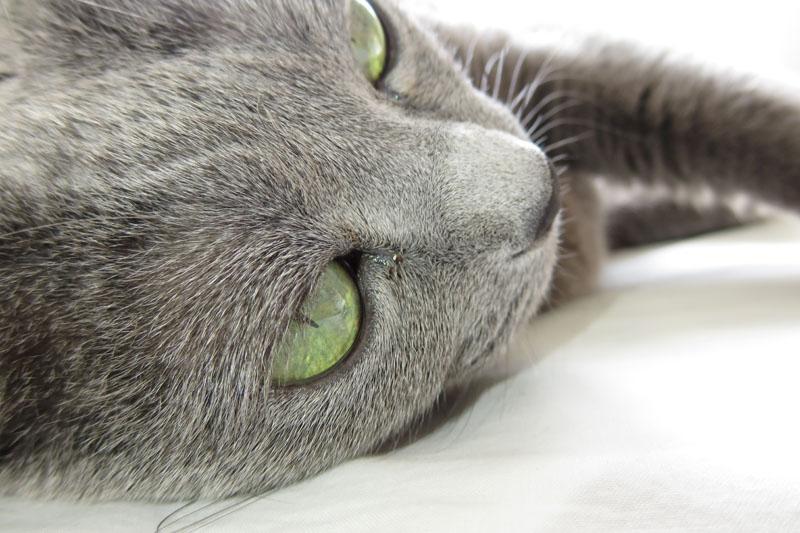 昼寝中の猫を接写。AFは速度も精度も良好なことが多いと感じられます。