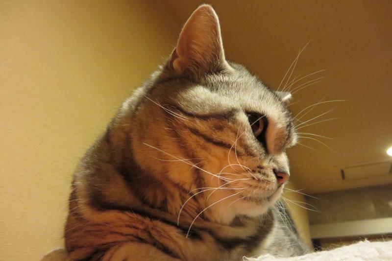 やや暗い状況下で猫に寄って撮影。ISO感度が1250まで上がりましたが、ノイズ感も少なく、わりと良好な画像になりました。