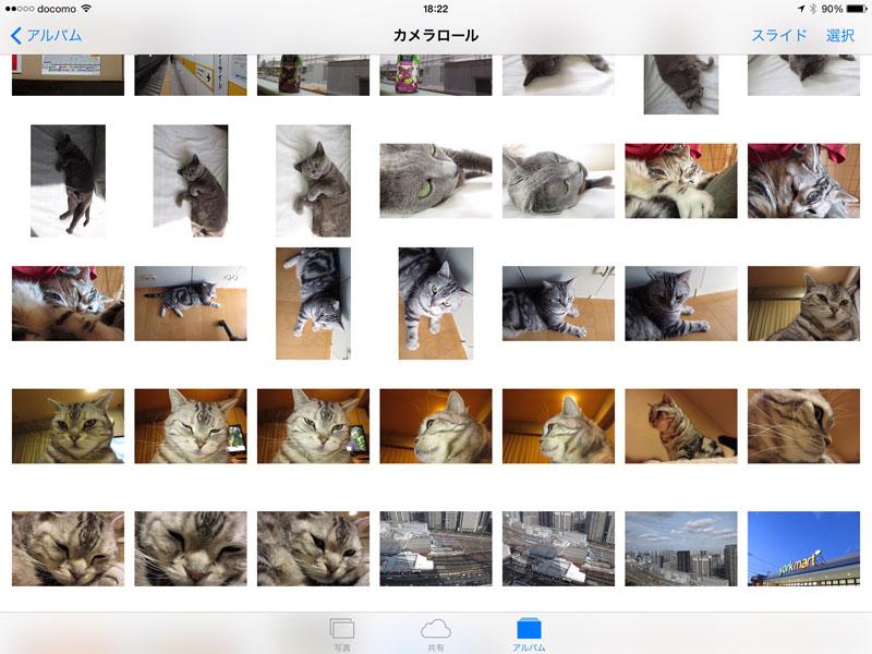 飛行機で北海道にロケに行き、雪が少なくて苦労して、でもどうにかなって帰宅して、猫を撮って……。スナップ写真で綴る自分の行動、振り返って見られるのは案外おもしろいですな。