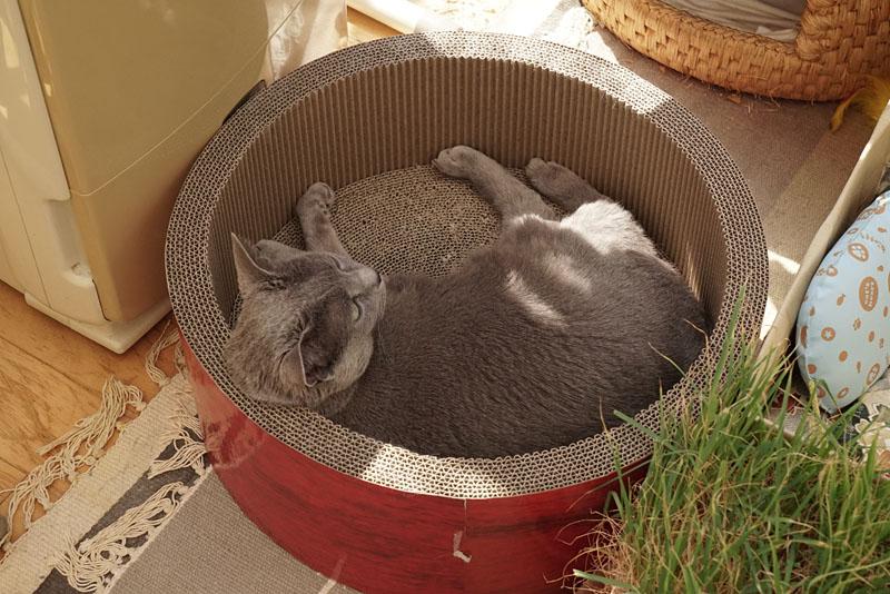 (1)うかちゃんはこの丸いヤツが好き。