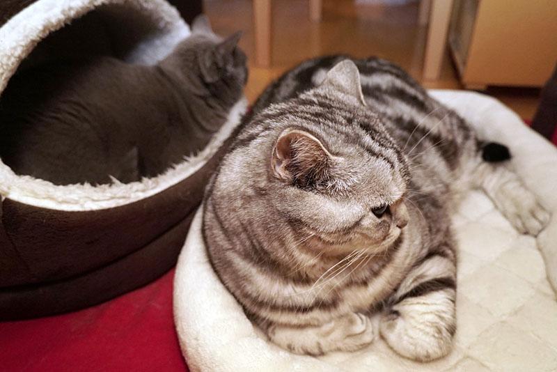 うかちゃんもブツ撮りしてもらいたいニャ。ぼくもブツ撮りしてもらいながらササミとシーバと猫缶を食べさせてもらいたいです。ニャニャニャ。ニャ。的な。