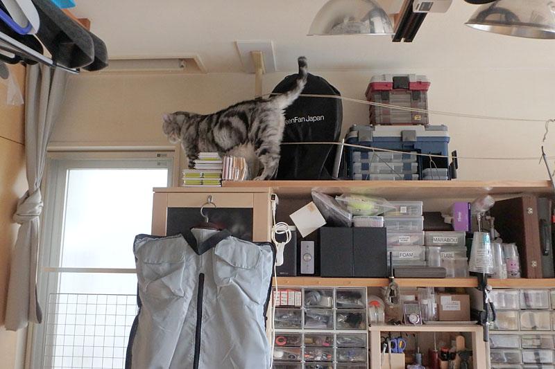 (1)ぼぼぼ、ぼくは天井付近まで上がってみた。