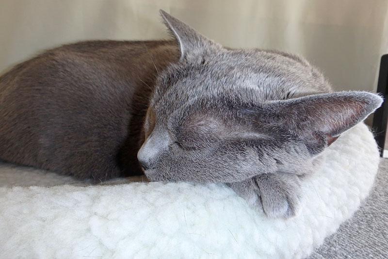 (1)うかちゃんは爆睡中なの。ニャニャニャ。