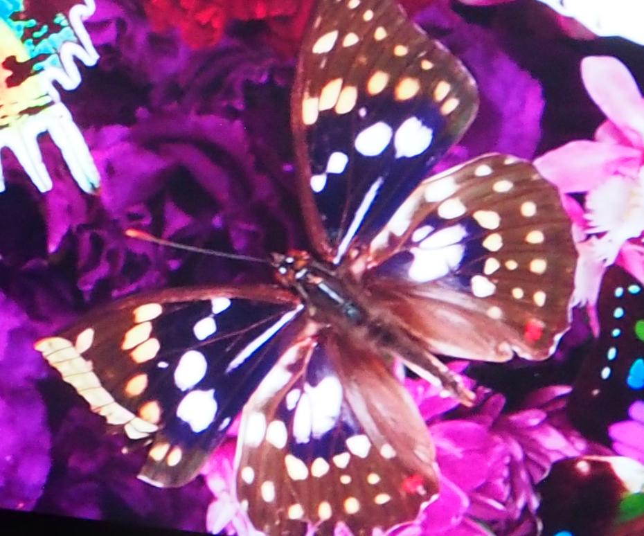 写真左の右下の部分に写っている蝶を拡大してみたが、それでもドットを認識できない