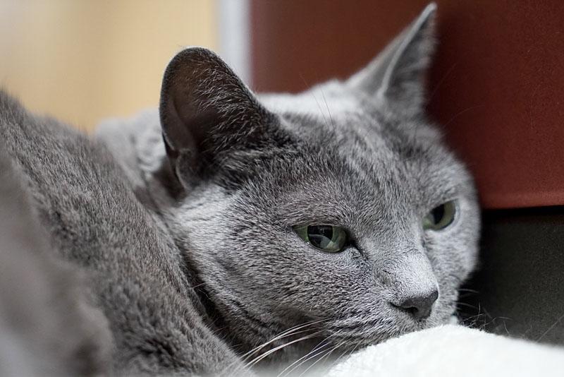 (3)うかちゃん眠くて視線を動かすのも面倒なの。