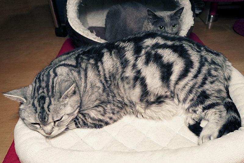 うかちゃんはネズミ色の猫ちゃんなのよ。ぼぼぼ、ぼくは白黒のシマシマ猫だけど茶色も少し入っているから猫缶とシーバをくニャさい。ニャ。ニャニャニャ。的な。