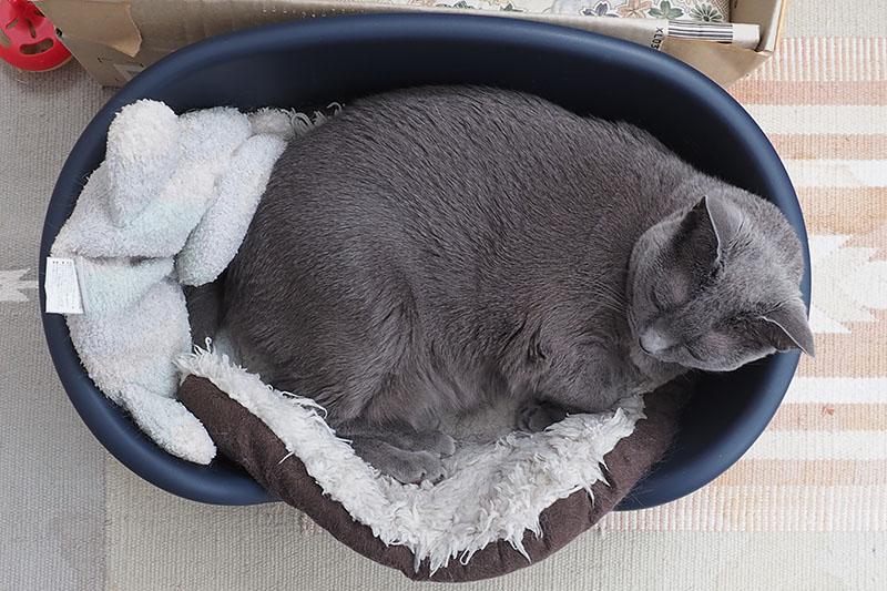 (1)これはうかちゃん専用ベッドなんですよ。
