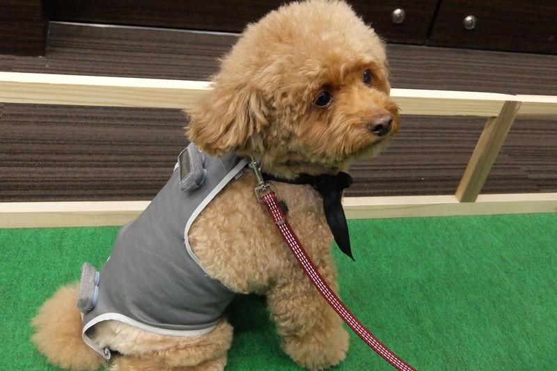 犬の背中につけた2つの「わんダントチャーム」でペットの状態を管理