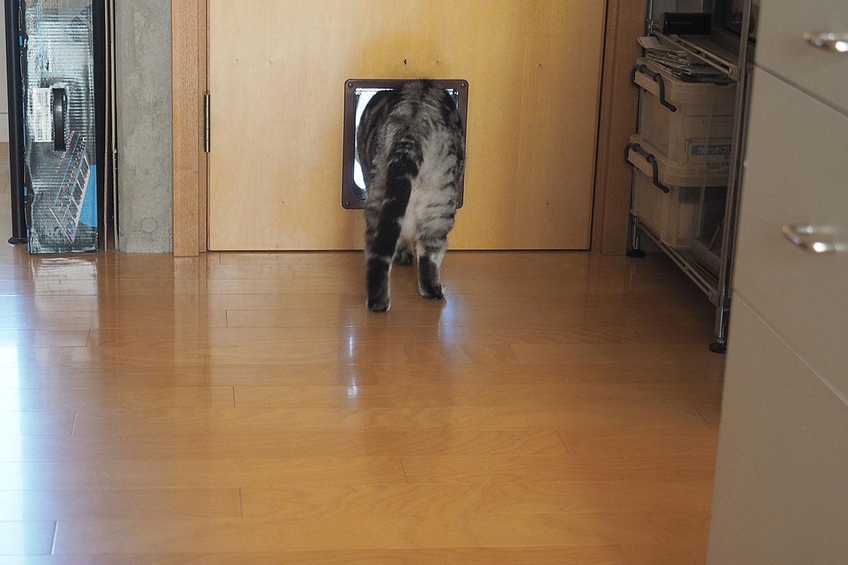 (2)猫ドアの向こうにうかの気配。舐めてあげましょう。