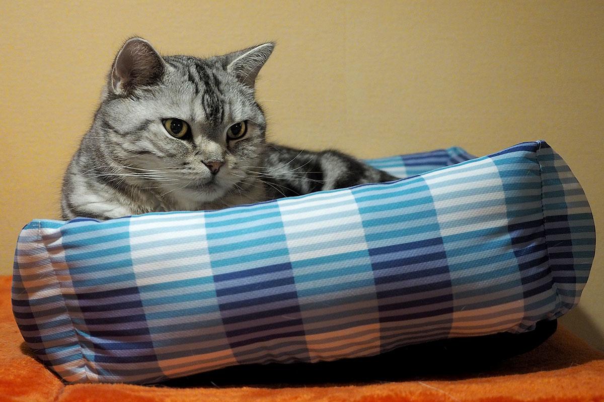 (2)でも今年はこの冷感寝床も好きですけど。眠くなってきました。