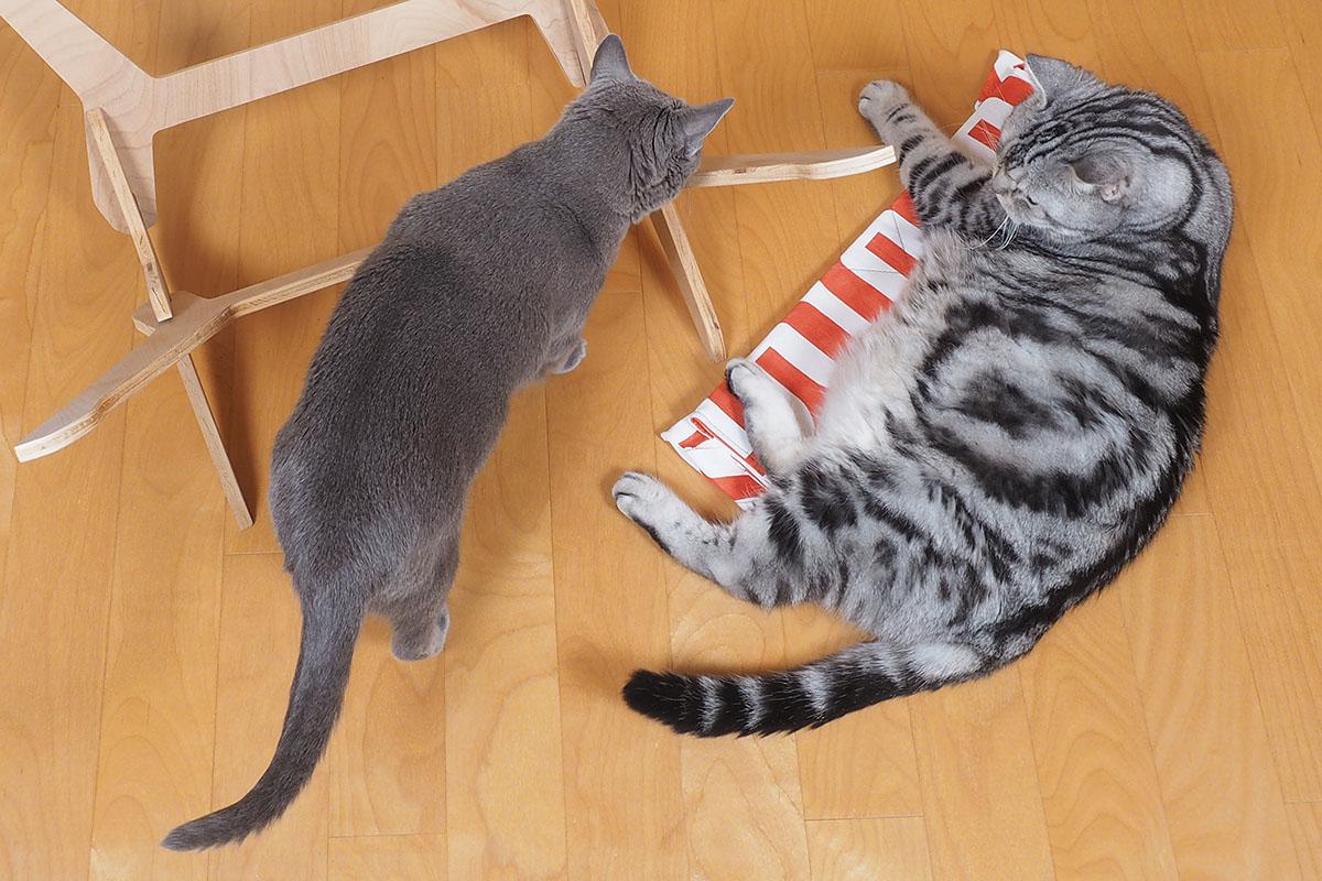 うかちゃんはパニョコンに興味がありません。ぼぼぼ、ぼくはパニョコンの画面に尻尾を付けるのが好きだけどシーバと猫缶のほうが好きです。ニャニャニャ。ニャ。的な。