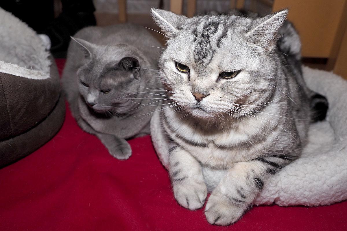 うかちゃんは猫目だしLEDがとても眩しいの。ぼぼぼ、ぼくも猫目だから眩しいけど猫缶がおいしいです。ニャ。ニャニャニャ。的な。