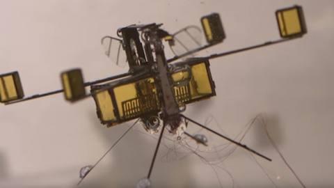 水空両用、水中からそのまま空中に飛び立てる0.175gの小型ロボット RoboBee