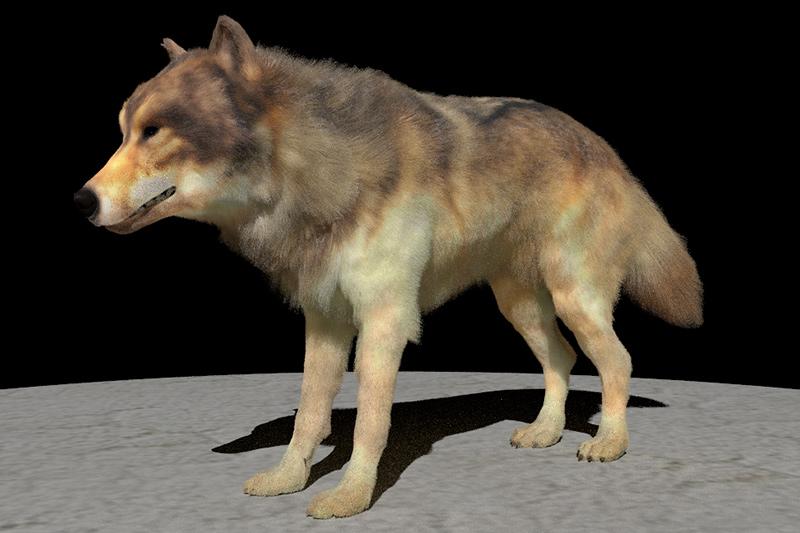新手法でレンダリングされたオオカミ
