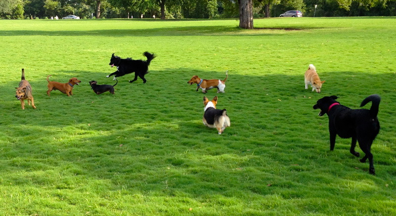 入力画像 / 写真に犬が8匹写っている