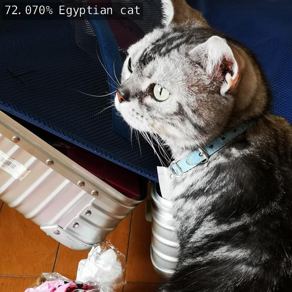 出力画像 /  72.070%でEgyptian cat