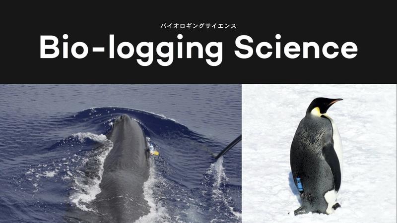 動物の行動データを調べるバイオロギング