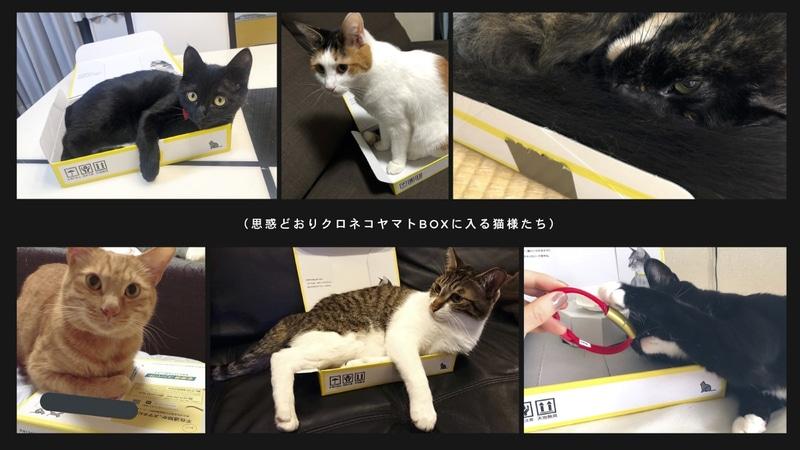 SNSにはパッケージに入る猫たちの様子が