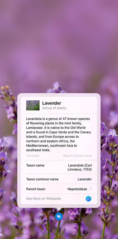 写真の被写体を調べる機能も、今回は試すことができませんでした。撮影して花の名前を調べるアプリなどもありますが、標準機能だけでできるのは便利です