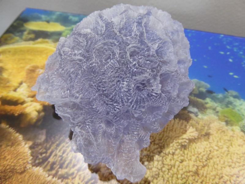 3Dプリントによるサンゴ