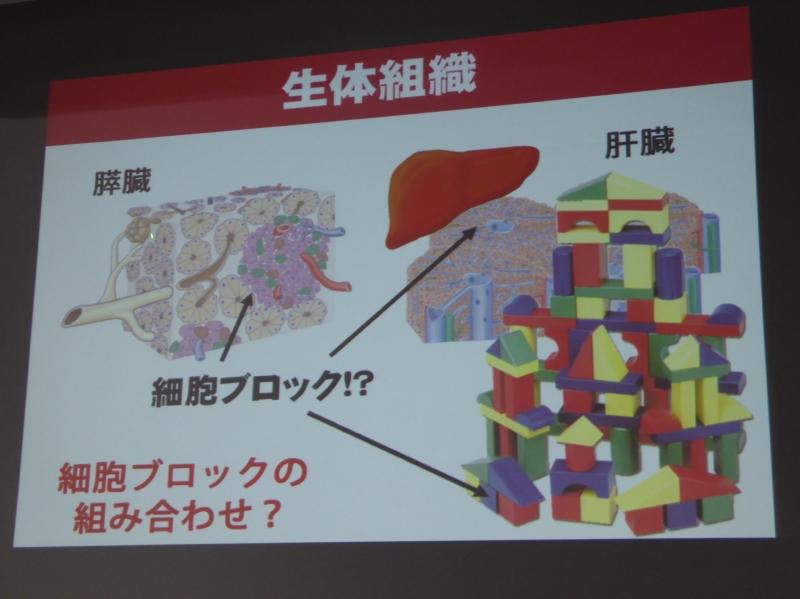 生体組織は細胞ブロックの組み合わせでできている
