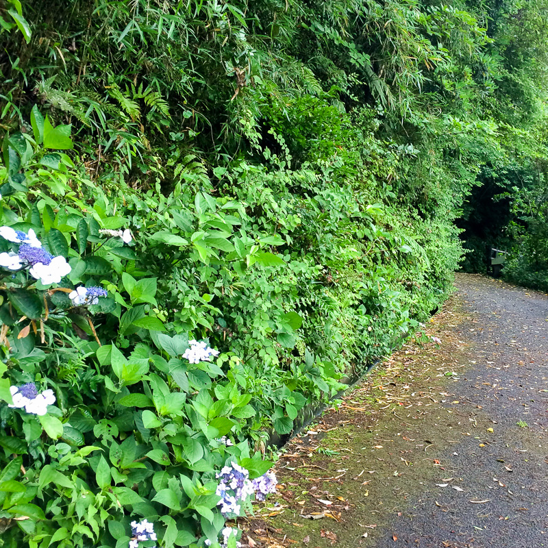 観音崎公園の道
