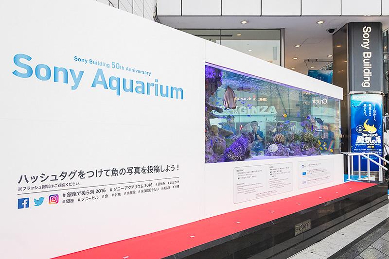 水槽には500匹あまりの魚が泳ぐ