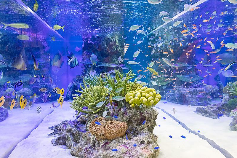 美しい魚たちが泳ぐ姿が楽しめる