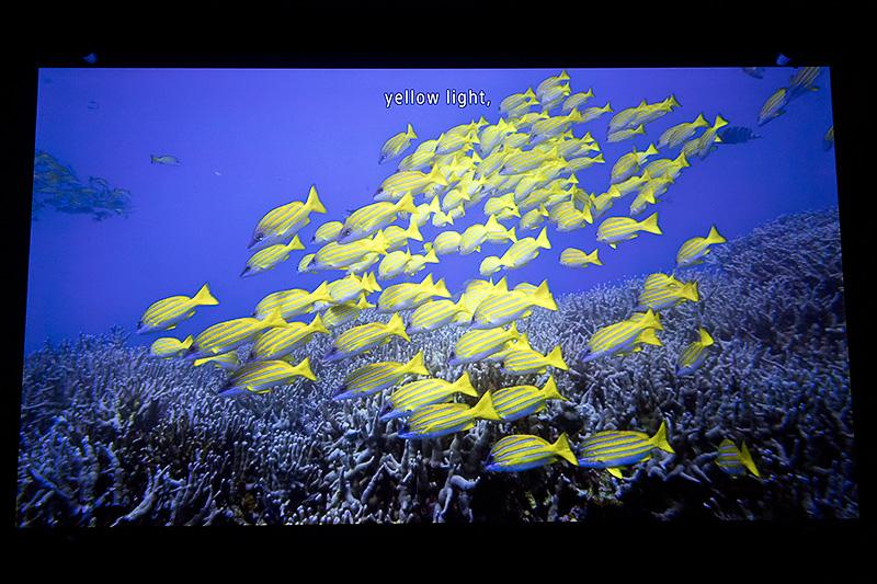 沖縄美ら海の美しい4k映像とハイレゾ音源のコラボレーションが楽しめる