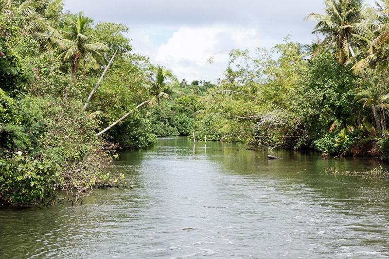 両岸に広がるジャングルの間を縫うように進む