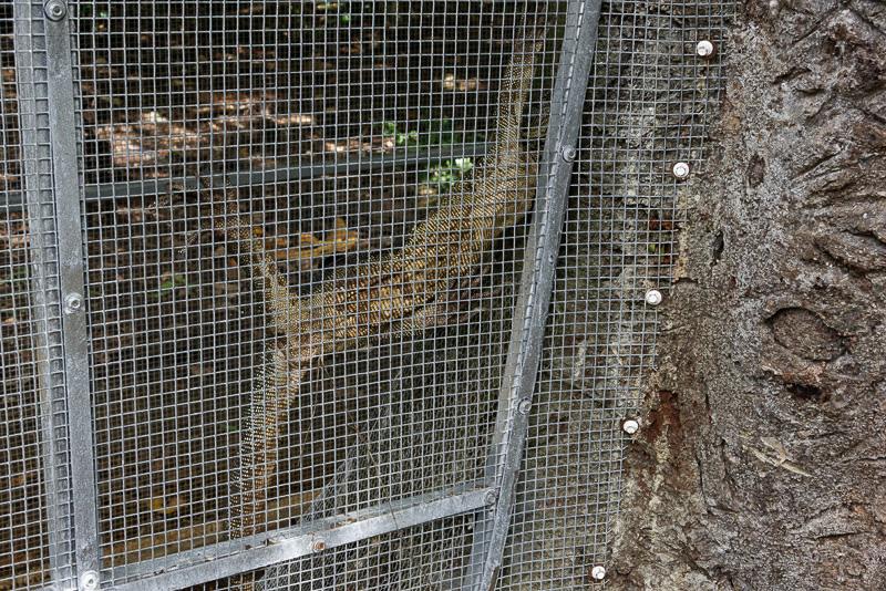 オオトカゲは檻の中でじっと動かずにいた