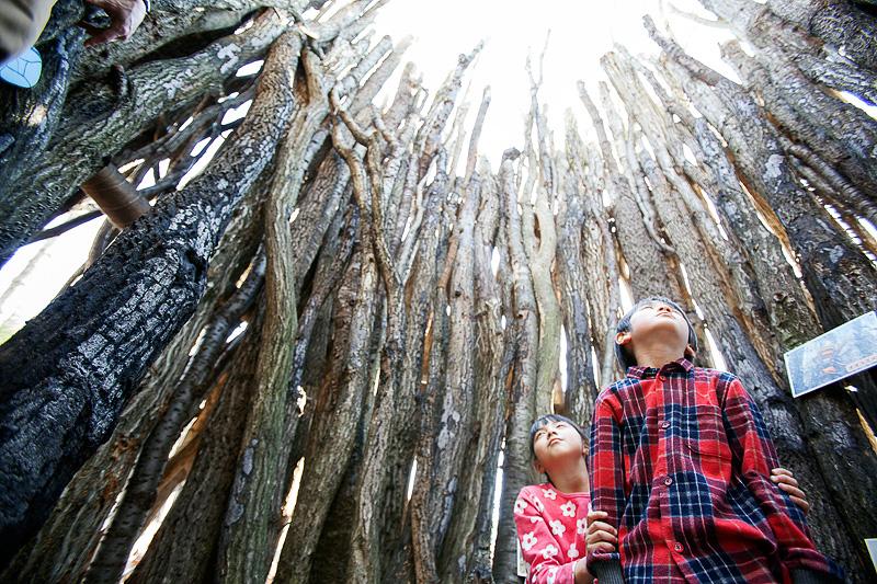 さまざまなアトラクションが用意された巨大迷路「森の迷宮 ~進めキッズ探検隊!~」のイメージ(写真提供:ツインリンクもてぎ)