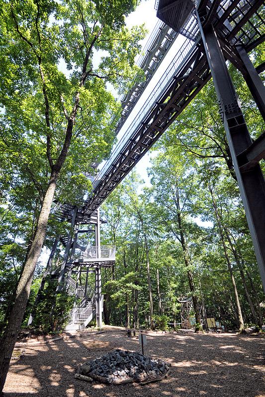 森の中にそびえ立つ高さ18mの樹冠タワー