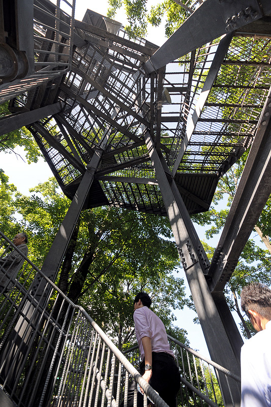 樹冠タワーは「森のジップライン ムササビ」のコースとなっている