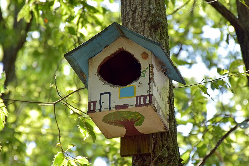 こちらはハローウッズのスタッフが作った巣箱。開口が鳥によって拡大されている