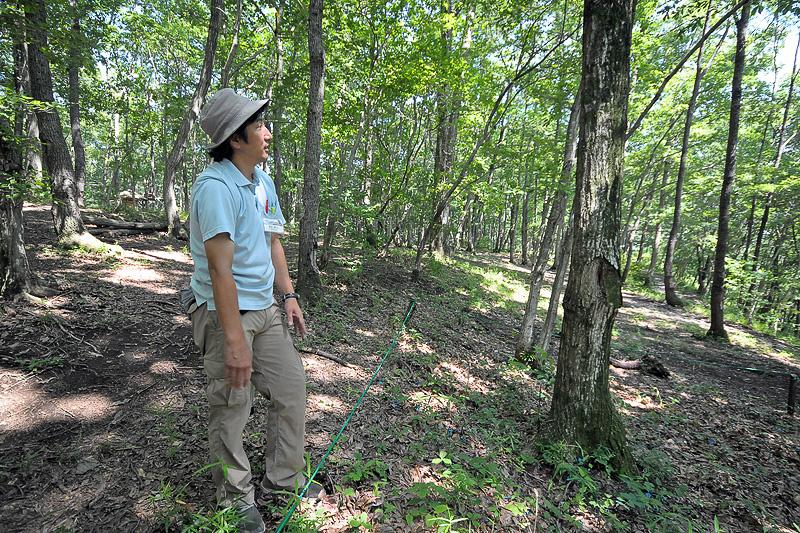 ハローウッズでは、自然の調査や研究なども進めている。このどんぐりの木から落ちた実が芽を出した場所をチェックし、どのように育つかを調査