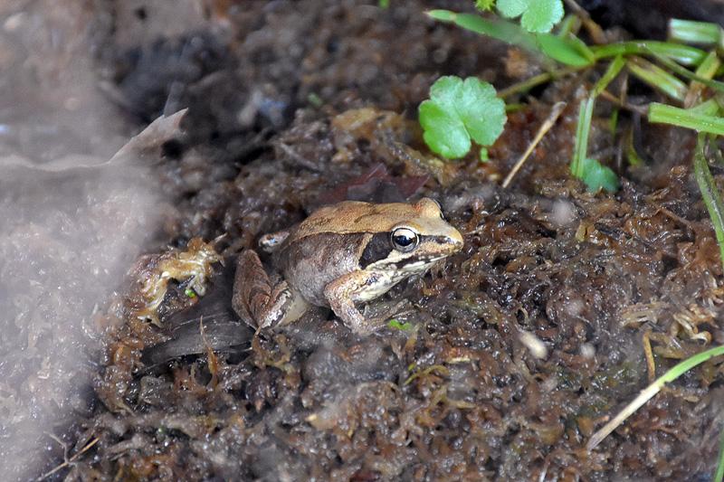 「森の教室」では、カエルやヤゴ(トンボの幼虫)などが飼育展示されている