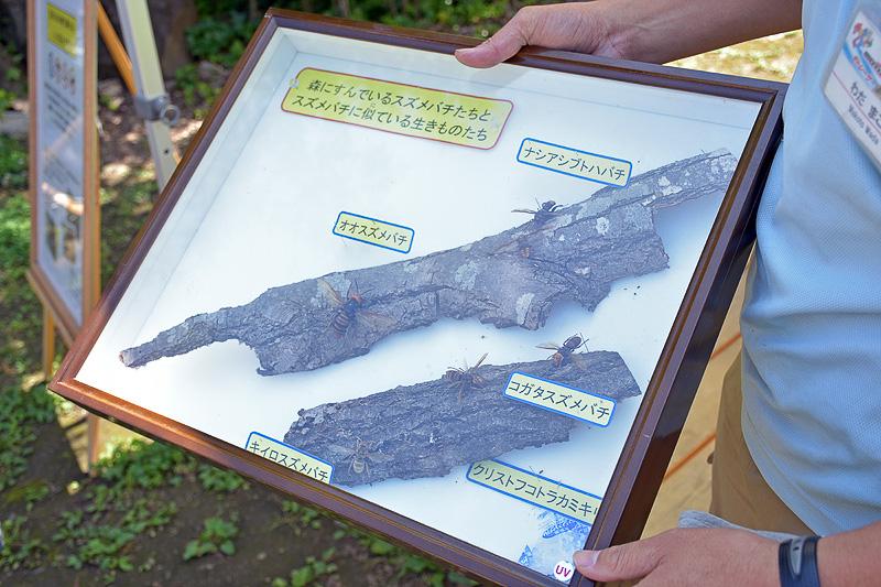 森に入る前、スズメバチの危険性や対応を説明するキャストリーダーの和田さん。自然をよく知っている人と一緒なのは心強い