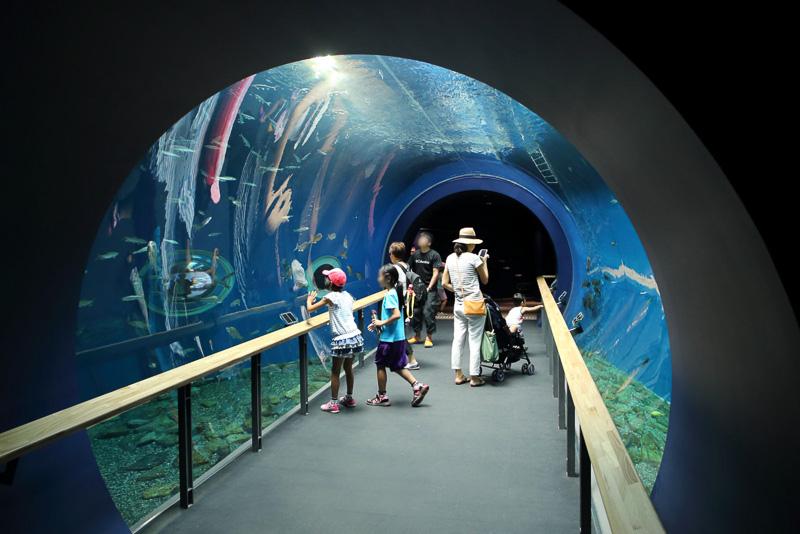 水槽のトンネルは多くの水族館で見られるものの、淡水魚のトンネルは全国的にも珍しいそうです